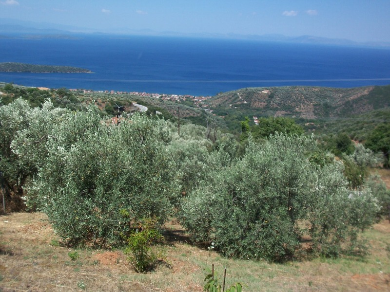 Buildable land with spectacular view, Lafkos - Property Pelion