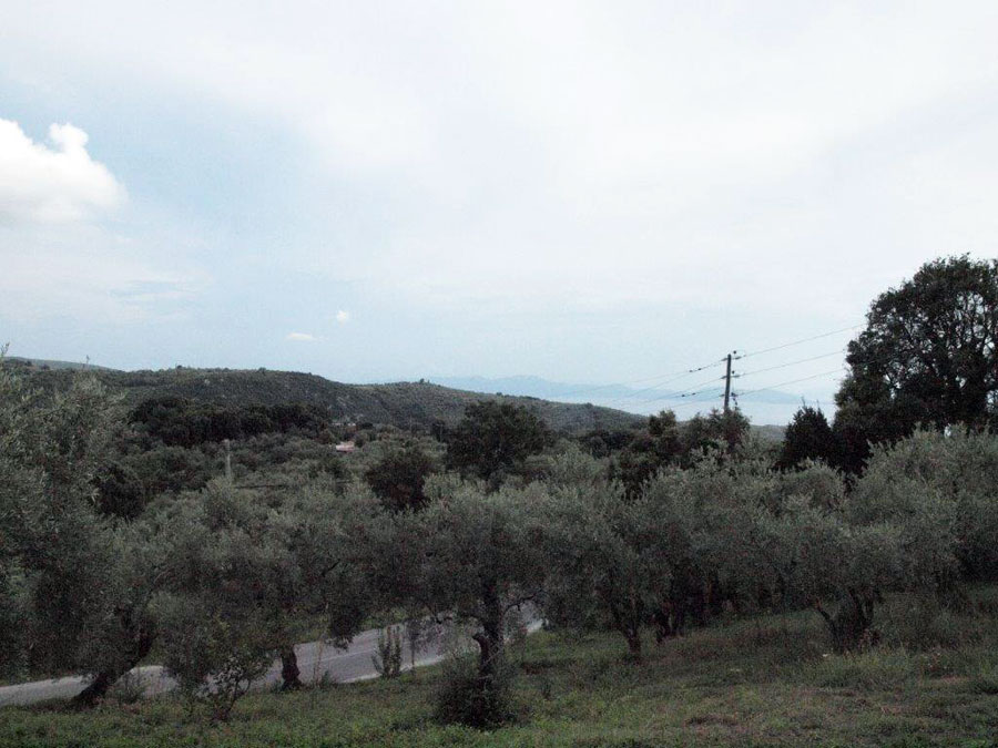 Milies building olive grove