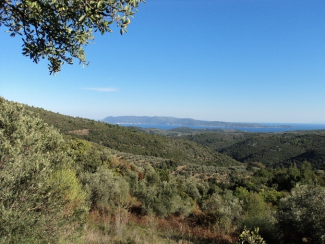 Large olive grove with sea view