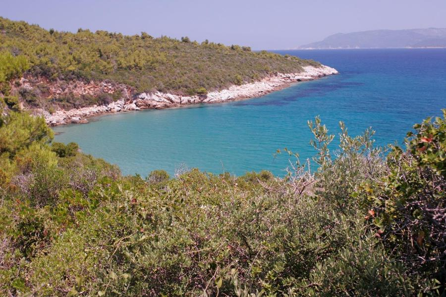 Seafront olive grove with panoramic sea view