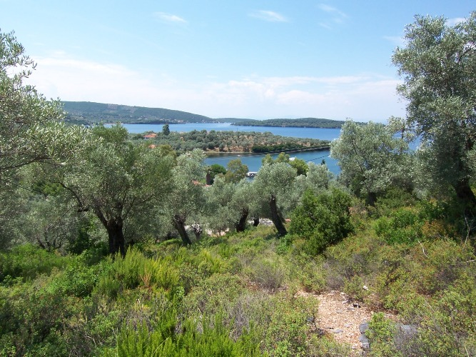Buildable olive grove with spectacular sea view